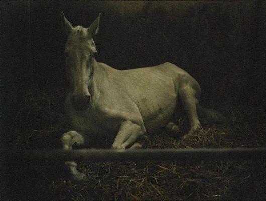 """""""Senza titolo"""" 2005, fotografia"""