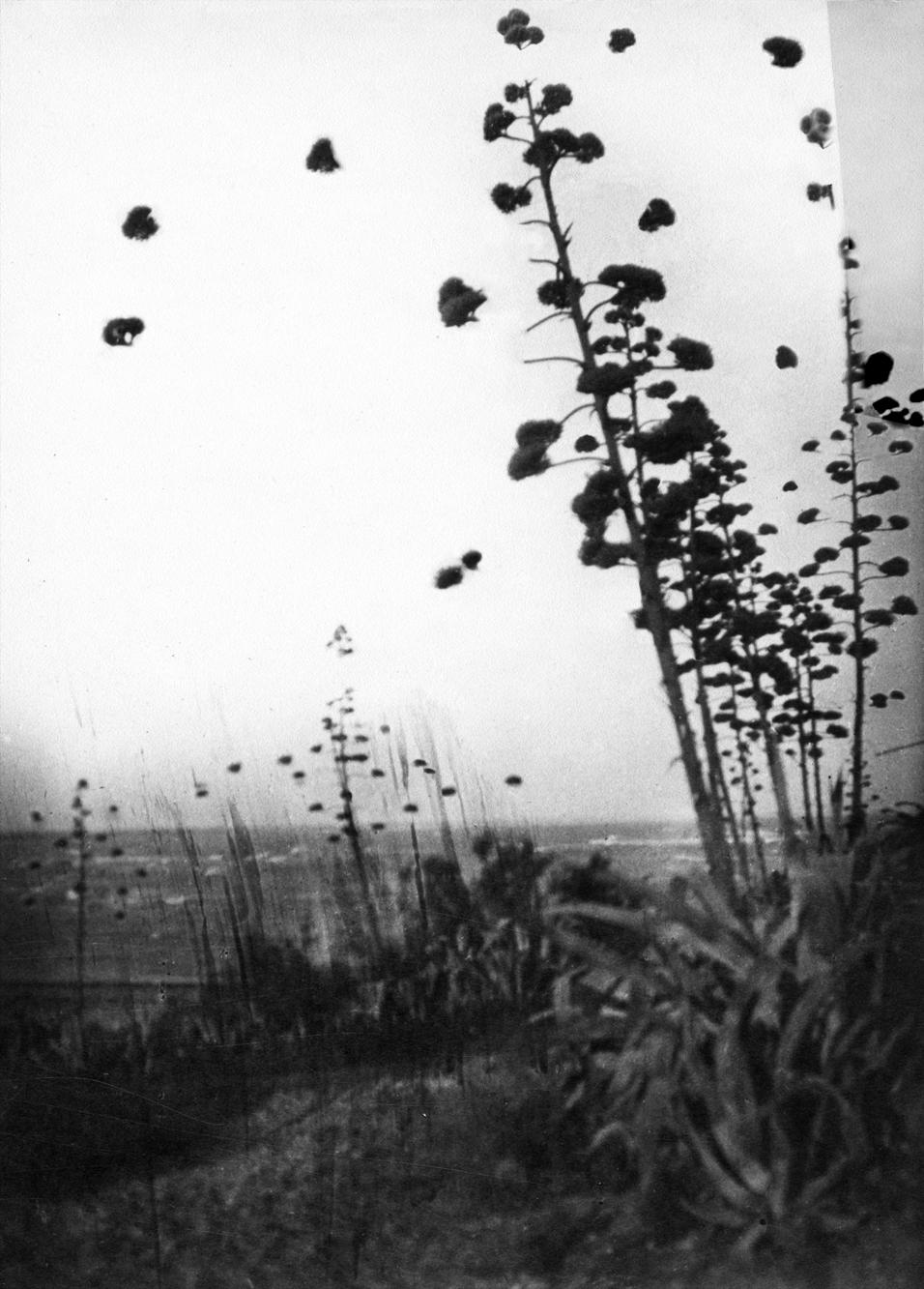 """Open Tree #5"" 2014-2018, stampa ai sali d'argento, 44 x 35,5 cm"