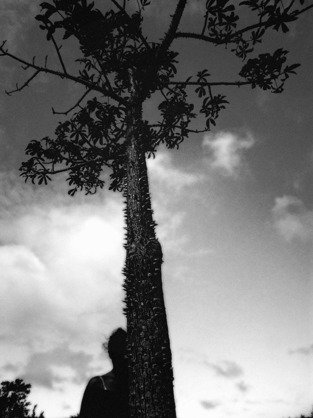 """""""Albero Spine"""" 2018, fotografia 23.5 X 17.5 cm"""