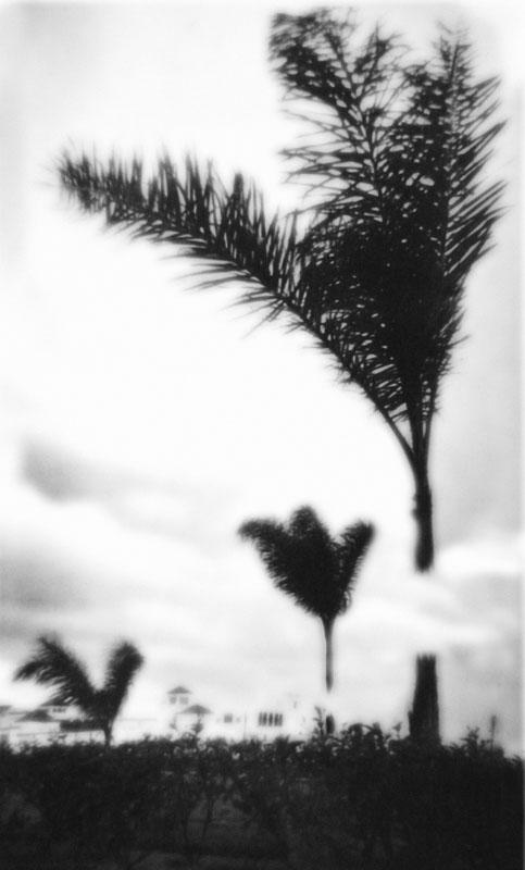 """Open Tree #2"" 2014-2018, stampa ai sali d'argento, 37 x 32 cm"