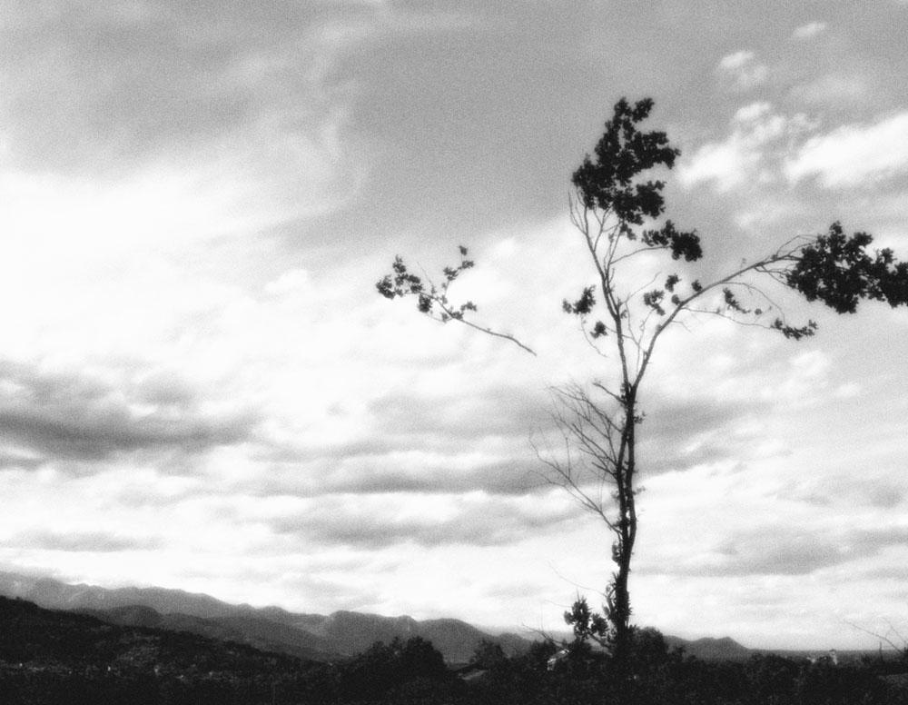 """Open Tree #3"" 2014-2018, stampa ai sali d'argento, 38 x 44 cm"