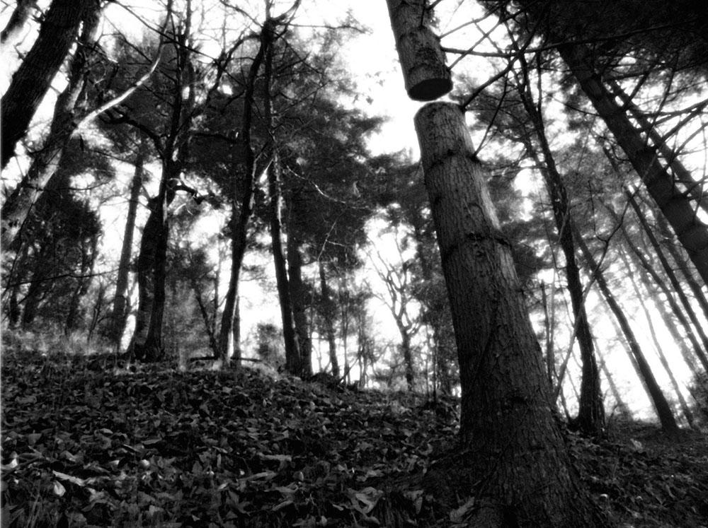 """Open Tree #4"" 2014-2018, stampa ai sali d'argento, 30,5 x 36 cm"