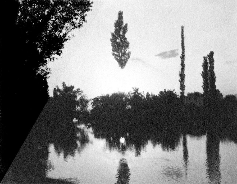 """Open Tree #6"" 2014-2018, stampa ai sali d'argento, 38,5 x 31,5 cm"