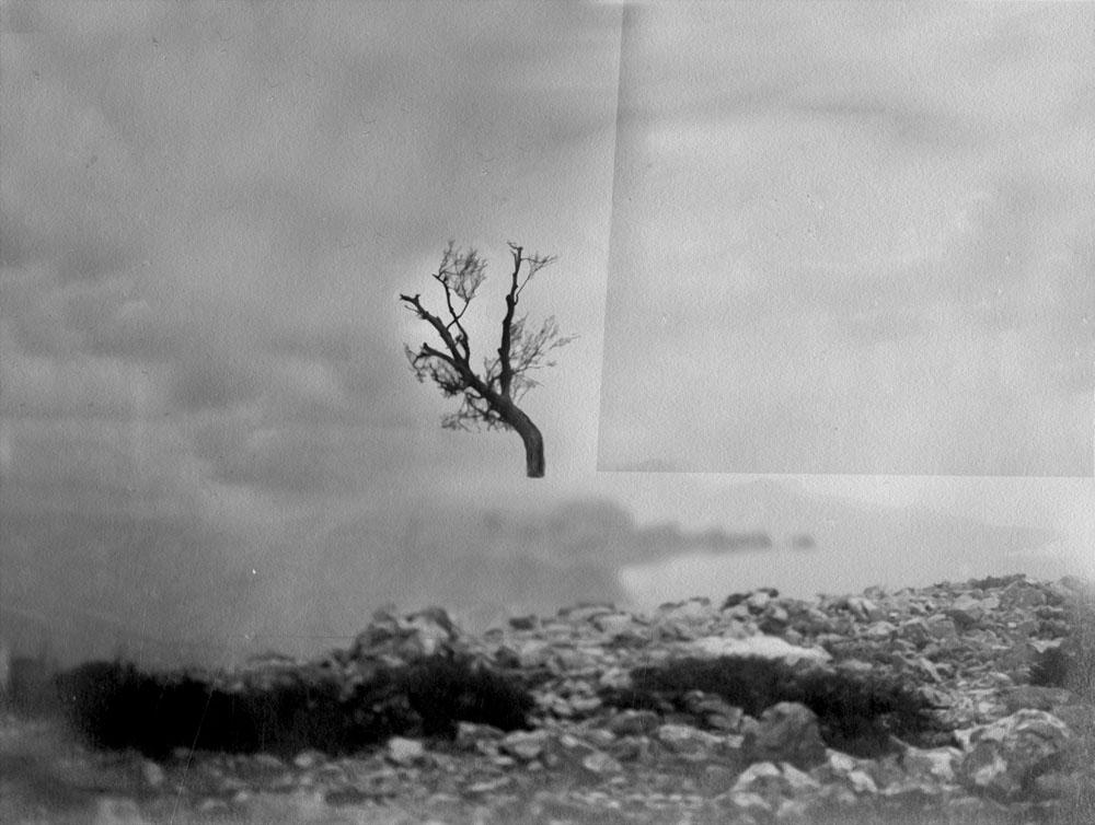 """Open Tree #7"" 2014-2018, stampa ai sali d'argento, 32 x 37 cm"