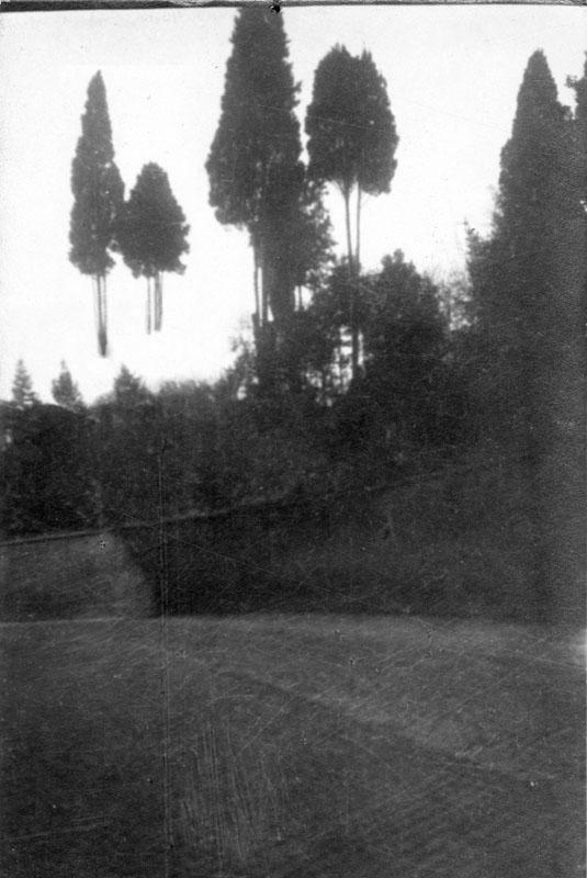 """Open Tree #8"" 2014-2018, stampa ai sali d'argento, 39,5 x 32 cm"