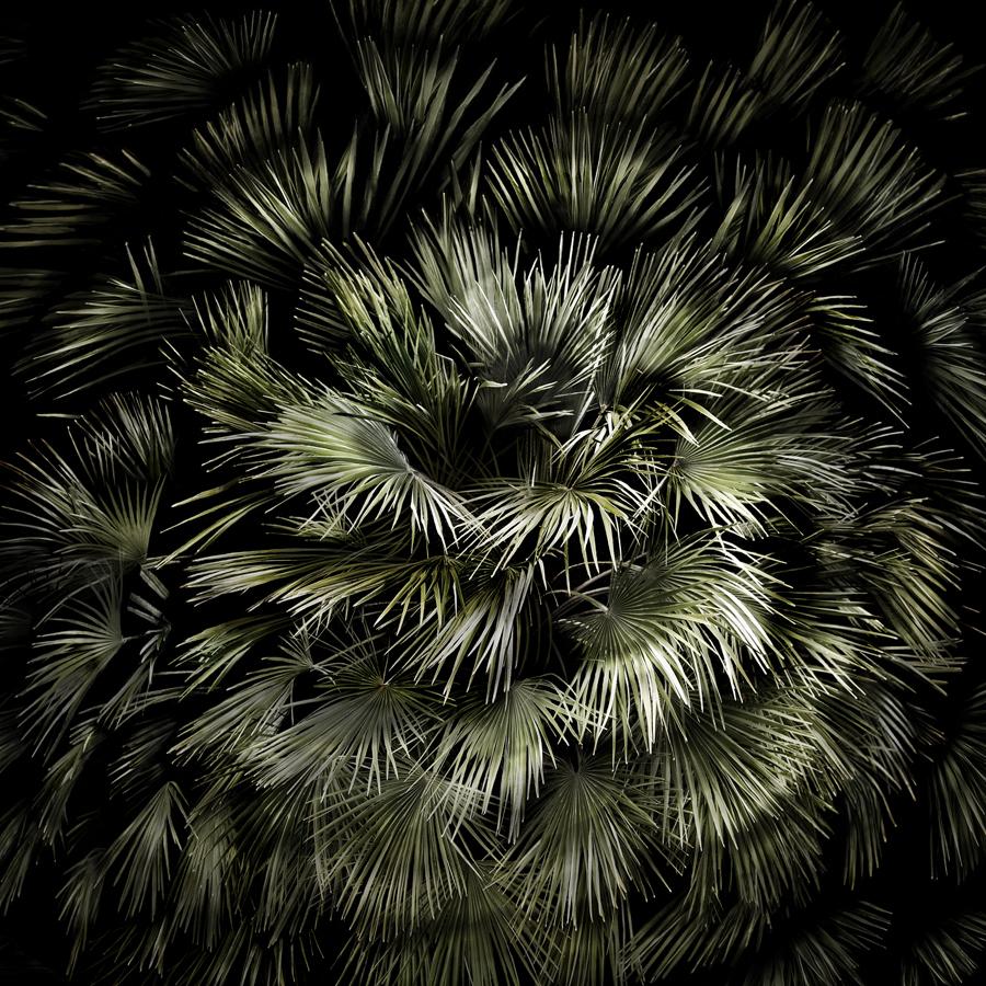 Palma Spiral