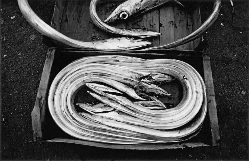 """""""Sicily. Porticello:Fish"""" 2001"""