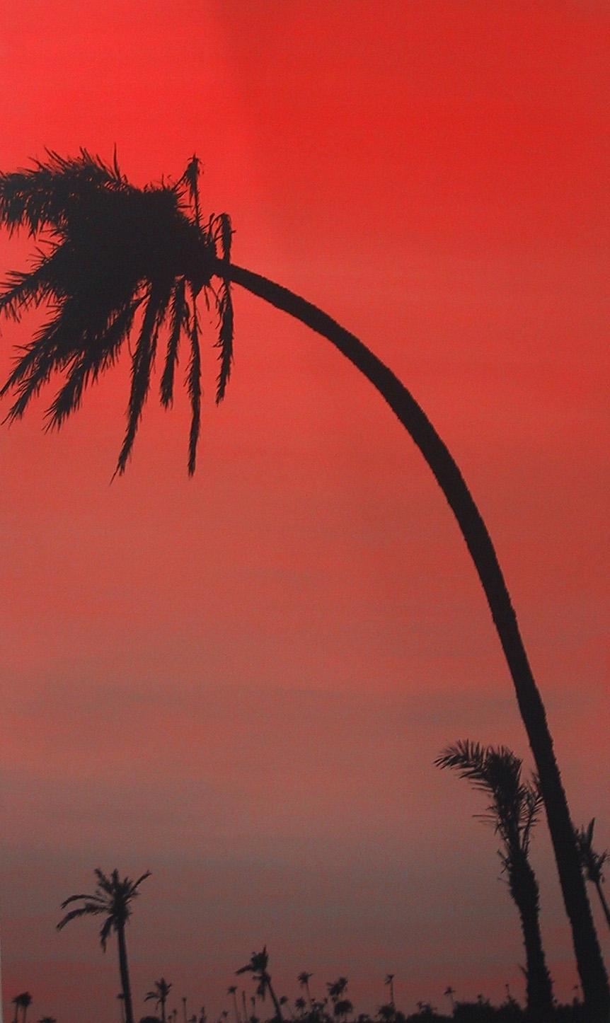 """Drunken palm"" 2003, olio su tela, 150 x 90 cm"