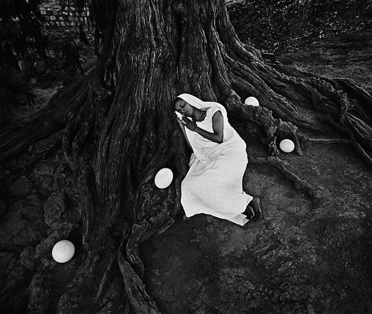 """The tree of life"" fotografia"