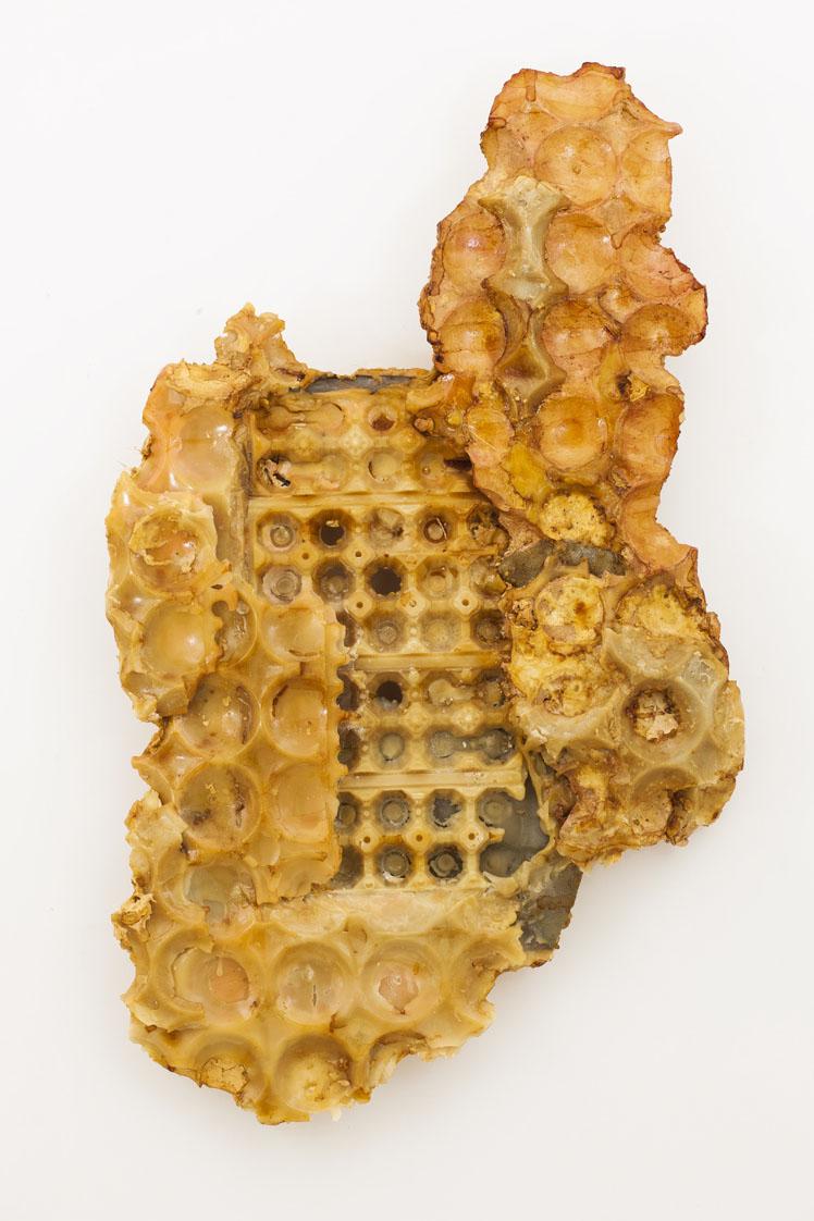 """""""Senza titolo"""" 2013, cera d'api, gesso e ceralacca, 65 x 102 x 10 cm"""